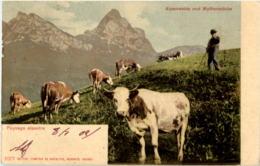 Alpenweide Und Mythenstöcke - SZ Schwyz