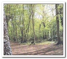 Macedonië 2011, Postfris MNH, Europe, Trees, Woods - Macedonia