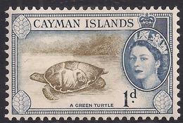 Cayman Islands 1953 - 62 QE2 1d Green Turtle MM SG 150 ( K1434 ) - Cayman Islands