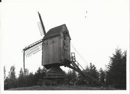 Geel Larumse Molen (Antwerpen) - Windmolen, Moulin à Vent, Foto-photo 12.5 X 9 Cm - Moulins à Vent