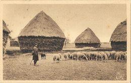 En Beauce, Troupeau De Moutons Et Meules De Foin - Tirage Des U.C.J.G. - Carte CAP Non Circulée - Viehzucht