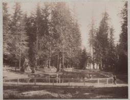 ° CANADA ° VANCOUVER ° Stanley Park ° Colombie Brit. ° Grande Photo ° - Plaatsen