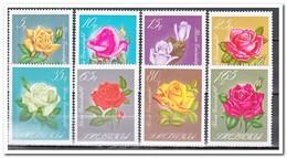 Albanië 1967, Postfris MNH, Flowers, Roses - Albanië