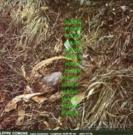 Fotografia LEPRE COMUNE Mammiferi Cacciabili Della Puglia Con SCHEDA ILLUSTRATIVA (195x195mm) - PERFETTA - Altre Collezioni