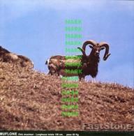Fotografia MUFLONE Mammiferi Cacciabili Della Puglia Con SCHEDA ILLUSTRATIVA (195x195mm) - PERFETTA - Altre Collezioni