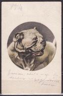 BAUER & TARNAI - BUDAPEST  - DOGS - Dogs