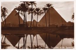 AP20 Cairo, Panorama Of The Pyramids Seen Through Palm Trees - RPPC - Pyramids
