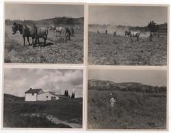 Photo Originale 1946 Le Mas Blanc Des Alpilles Bouches Du Rhône Ferme Agriculture Labour Labourage Chevaux Lot De 4 - Lieux