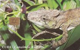 Cuba, CUB-087, Chameleon (Camaleolis Barbatus), 2 Scans - Cuba