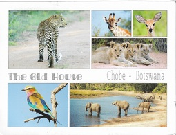 Afrique - Botswana - CHOBE - The Old House - 1 Joli Timbre Philatélique Au Verso - Voir Scan - Cpm - écrite - - Botswana