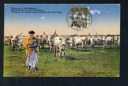 Hortobagy. *Troupeau De Boeufs Dans La Plaine De L'Hortrbágy* Matasellada De Favor. - Hungría