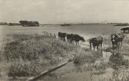 Mooi Nederland - Koeien In De Ondergelopen Uiterwaarden [AA14-536 - Non Classés