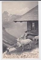 Chèvres à L'alpage. Ziege. Goats . C. P. N. Série A. - Elevage