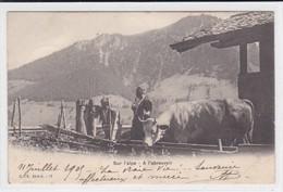 Sur L'alpe - A L'abreuvoir. Auf Der Alp, Beim Tränken. C. P. N. Série G. 17 - Elevage
