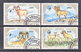 MONGOLIA  1564-7   (o)  MOUNTAIN  RAMS  OVIS  AMMUM - Farm