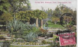 AK 0071  Cactus Bed - Eastlake Park ( Los Angeles ) Um 1914 - Bäume