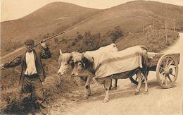 Pays Basque - Attelage Basque - Edition Marcel Delboy, Carte N° 205 - Equipaggiamenti