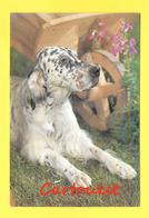 Setter Irlandais - Chien - Hund - Dog -  CANE - - Chiens