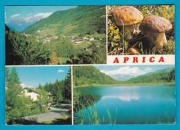 Aprica Sondrio Vedutine Funghi - Viaggiata - Italia