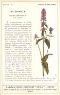 """08767 """"COMO - LABORATORIO CHIMICO DECA - BETONICA - STACHYS OFFICINALIS T. - PIANTA MEDICINALE""""  CART NON SPED - Plantes Médicinales"""