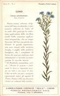 """08769 """"COMO - LABORATORIO CHIMICO DECA - LINO - LINUM USITATISSIMUM - PIANTA MEDICINALE""""  CART NON SPED - Plantes Médicinales"""