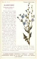 """08770 """"COMO - LABORATORIO CHIMICO DECA - RADICCHIO - CICHORIUM INTYBUS - PIANTA MEDICINALE""""  CART NON SPED - Plantes Médicinales"""
