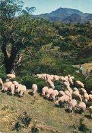 Couleurs De La Reunion  Edit Ganowski..no.720...paysage De La Plaine Des Cafres.... - Autres