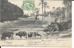 EGYPTE  LA FERME EGYPTIENNE   ECRITE 1903 - Egypt
