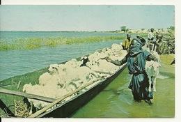 MALI / BERGER SE PREPARANT A TRAVERSER LE NIGER AVEC SON TROUPEAU (avec BELLE PHILATELIE) - Mali