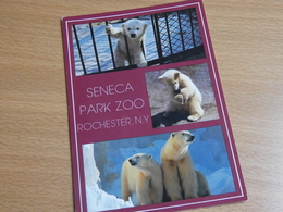 ZOO  TIERPARK  ROCHESTER NY. OURS. - Rochester