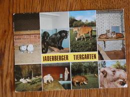 ZOO  TIERPARK  JADERBERGER TIERGARDEN. - Postcards