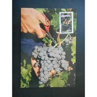 Les Vendanges - Oblit Epernay 25/3/06 - Maximumkaarten