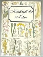 Heilkraft Der Natur Eugen Fischer Ed 1981 Hallwag Bern Santé Par Les  Plantes Nombreuses Planches Illustrées - Santé & Médecine