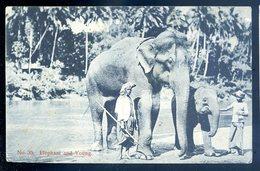 Cpa Du Sri Lanka Ceylon Ceylan -- Elephant   And Young   YN3 - Sri Lanka (Ceylon)