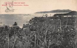CPA ILES SOUS LE VENT DE TAHITI - RAIATEA - Plantations De Cocotiers, à Tevaitoa - Polynésie Française