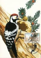 BIRDS, MIDDLE SPOTTED WOODPECKER, CM, MAXICARD, CARTES MAXIMUM, 1989, ROMANIA - Climbing Birds