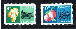 "Bulgaria - 1967. I Due Francobolli  "" Frutta "". Uva  Melograno. Two Stamps ""Fruits "" Of The Set.Grapes Pomegranates. MNH - Frutta"