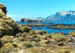 1 AK Antarktis Antarctica Prion Island * Britisches Überseegebiet Südgeorgien - Landschaft Dieser Insel * - Postcards