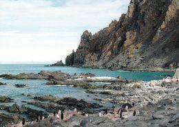 1 AK Antarctica Antarktis * Elephant Island - Cape Lookout - Die Insel Gehört Zu Den South Shetland Islands * - Postcards
