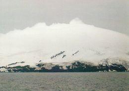 1 AK South Sandwich Islands * Die Insel Candlemans * Britisches Überseegebiet Im Südatlantik * - Postcards