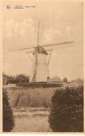 Gierle : Molen 1768 - Lille