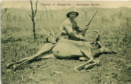 ETHIOPIE(ABYSSENIE) TYPE(CHASSE) - Ethiopie
