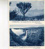 ETHIOPIE_CONGO(IMAGE) ARBRE - Ethiopie