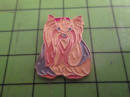 310c Pin's Pins / Beau Et Rare / THEME ANIMAUX : CHIEN YORKSHIRE - Animals