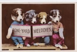 AP98 Animals - Dressed Up Dogs, Bone Yard Melodies - Honden
