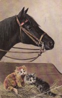 AP98 Animals - Horse And Kittens - Artist Signed Muller Munchen - Cats