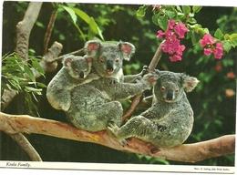 THE   KOALA  KOALA   FAMILY - Andere
