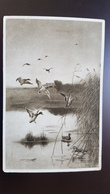 """""""The Lake""""   - OLD Vintage Postcard 1910s Hunting / Chasse - Duck - Oiseaux"""