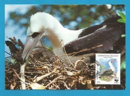 Christmas Island  1990  Mi.Nr. 305 , Weltweiter Naturschutz Abbottstölpel - Maximum Card - First Day  6 June 1990 - Christmas Island