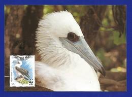 Christmas Island  1990  Mi.Nr. 304 , Weltweiter Naturschutz Abbottstölpel - Maximum Card - First Day  6 June 1990 - Christmas Island